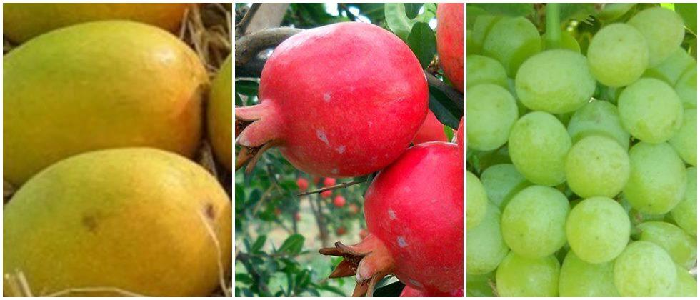 Six new orchard clusters in the state for agricultural exports