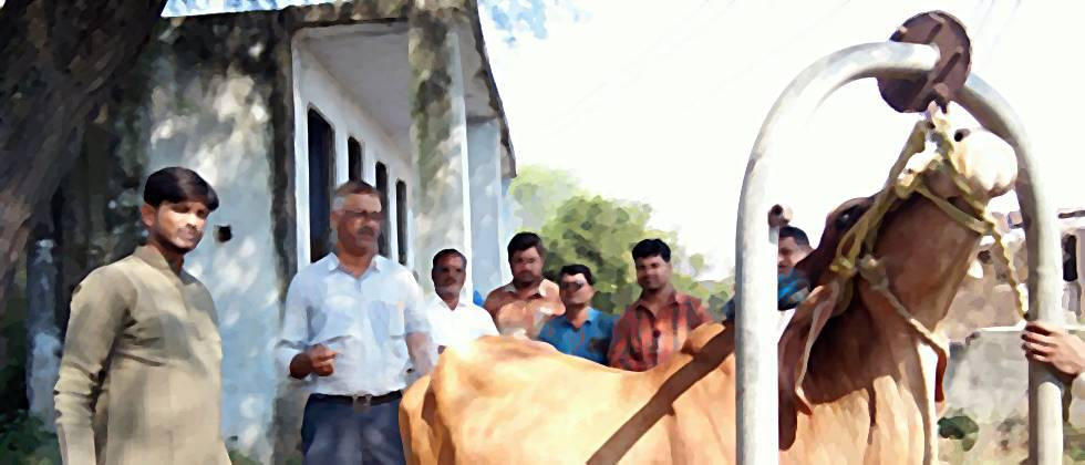 demand to give insurance cover for animal husbandry department workers