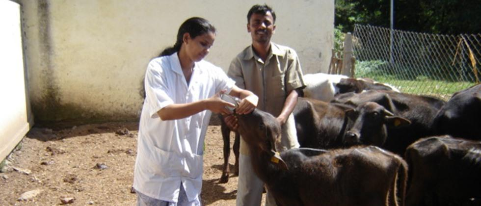 Proper care should be taken while treating sick animals