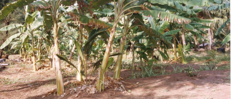 shed for coconut plant