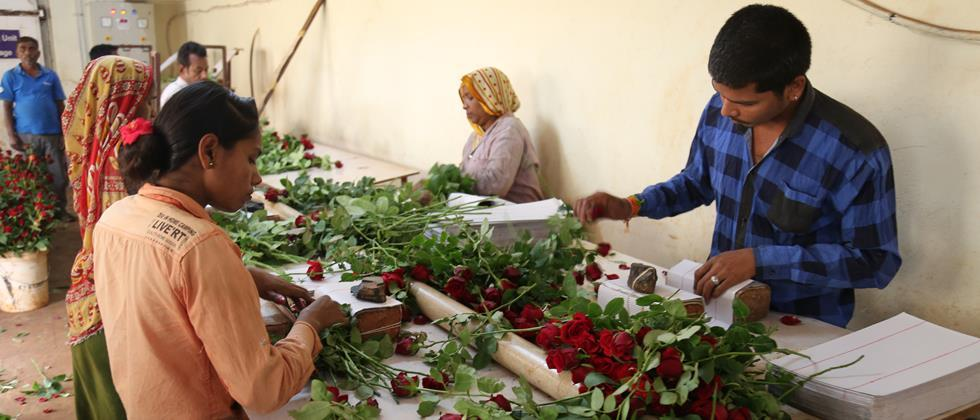 while packing of rose flowers