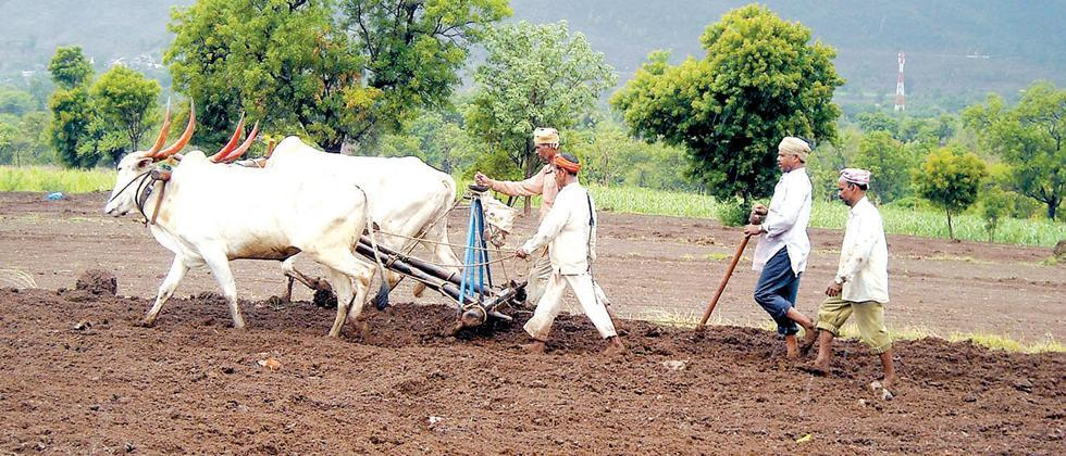 Kharif sowing on 92% area in Nanded district