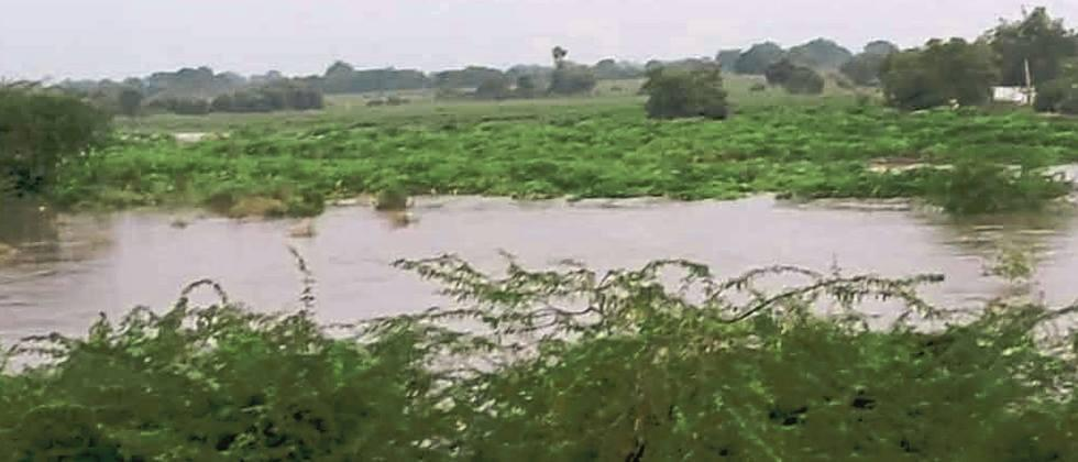 Dudhna river floods, water in crops