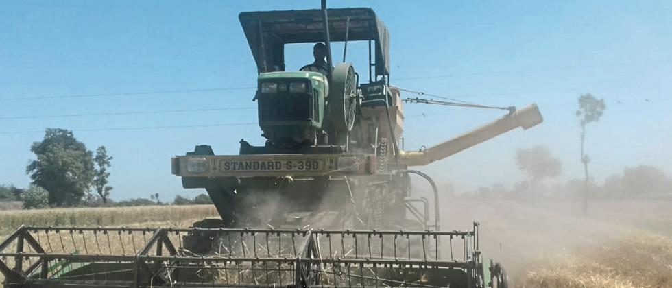 In Nashik district, the pace of wheat harvesting in fear of unseasonable rain
