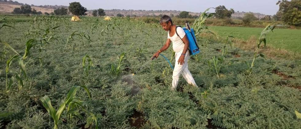 Rabbi crops on 8.5 lakh hectares in Aurangabad, Jalna and Beed districts