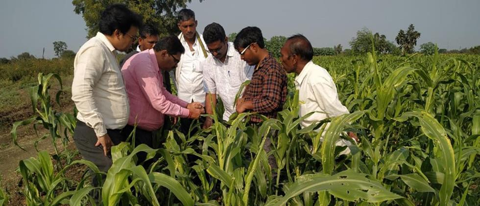 fall army worm attack on tide in Hingoli district