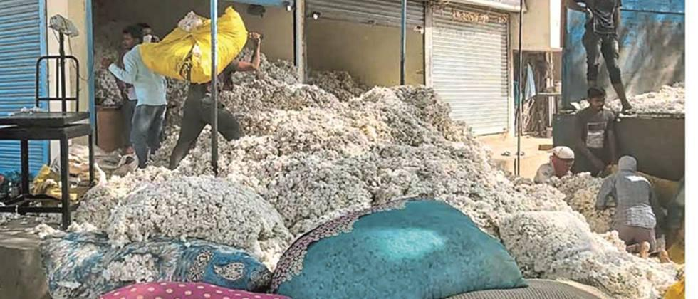 Two officers Appointment as graders for buying cotton in Ambad