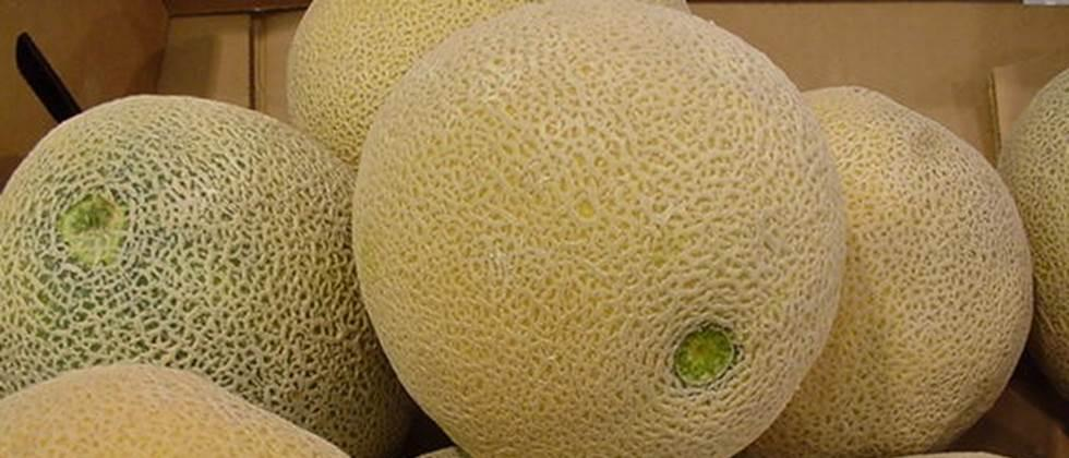 Melon in Aurangabad Average rate of Rs 1000