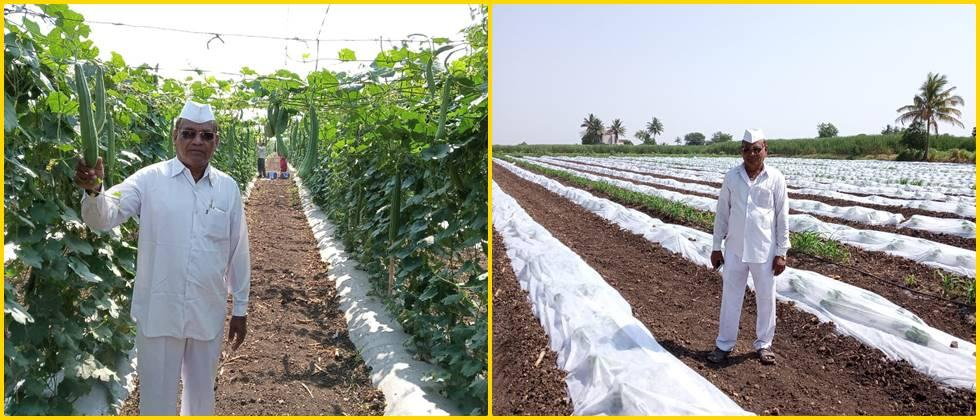 Modern techniques such as mulching and crop cover are used in vegetable and fruit crops