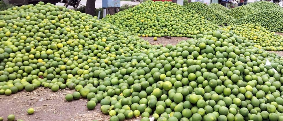 Citrus in the state is Rs. 1000 to 4000 per quintal