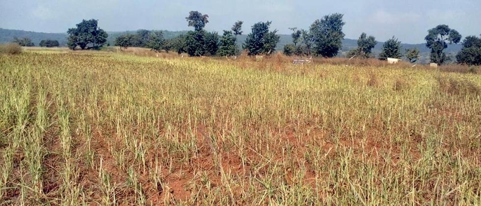 Vertical crops consumed by wildlife
