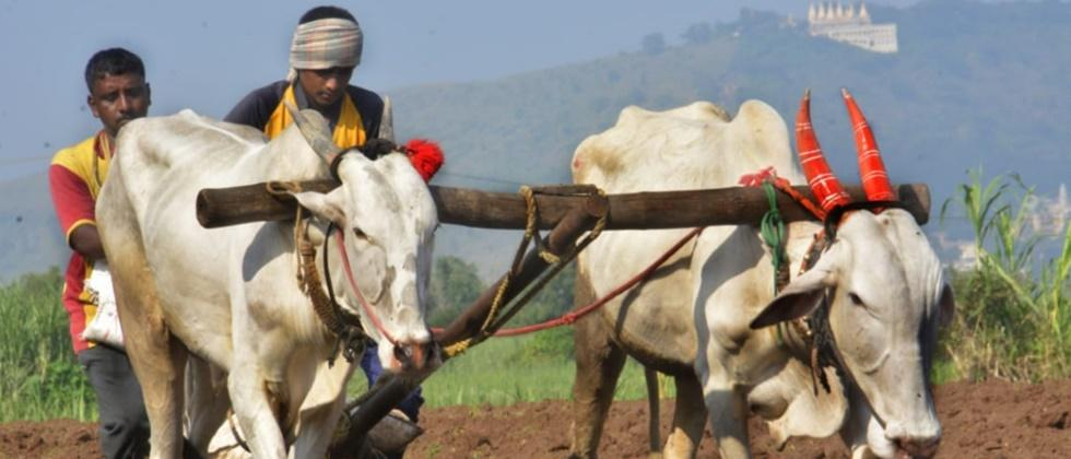 Sowing slowed down due to insufficient rainfall in Khandesh