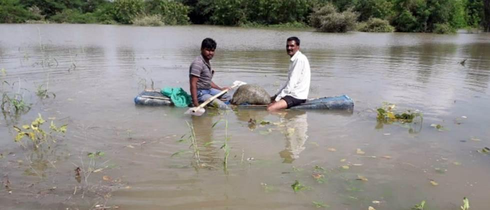 crops damage due to flood