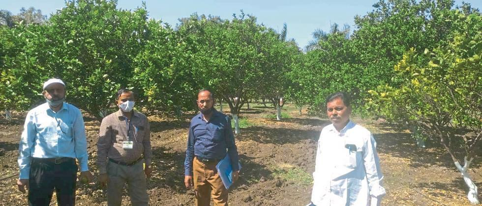 Citrus Center Nursery Inspection for national standardization
