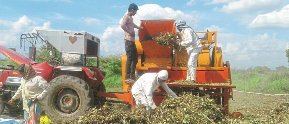 Accelerate soybean threshing in Pathrud