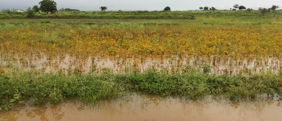 Damage to crops on 63 thousand hectares in Nagar district