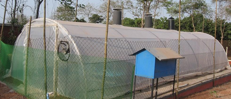 Tunnel type solar dryer