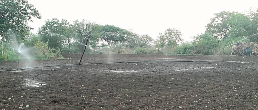 Rainfall in Nanded district Longing; The sowing was stoped