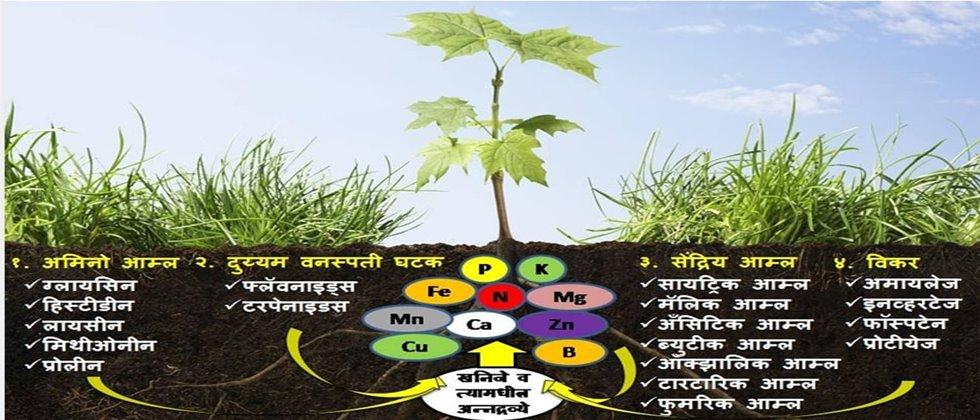 Harmones from roots is important for crop