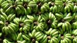 north india in banana export stop