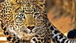 Panic in the countryside due to fears of leopard