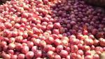 Onion in the Nagar district is stable at half-five thousand
