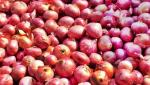 Onion Conference of Farmers' Union to be held at Chandwad : ghanwat