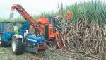 Harvesters harvested sugarcane since the labor had not yet arrived