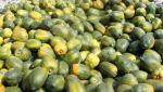 farmers cant get expected rate for papaya