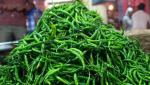 There is no demand for chilli in Nashik