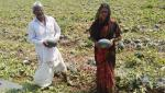 water melon, scrobiculate growers hit farmers