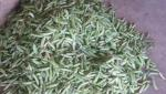 peas 2000 to 3000 rupees per qintal in Parbhani