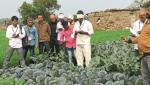Akola in farmers sowing foreign vegetable