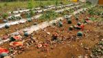 watermelon crop damage due to corona issue