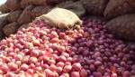 The arrival of onion in Khandesh increased