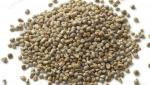 In Khandesh, the area of millet will grow