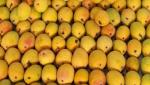 Eliminate the problems of mango transportation, distribution system