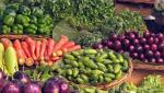 over one thousand farmers done registration for vegetable sell