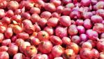 demand for to Stop government intervention in the onion trade