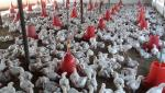 Poultry can be beneficial for female farmers Dr. Sharad Gadakh