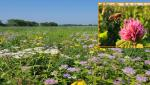 Small prairies around agricultural fields can help bees get through the winter