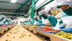 food processing business have opportunities
