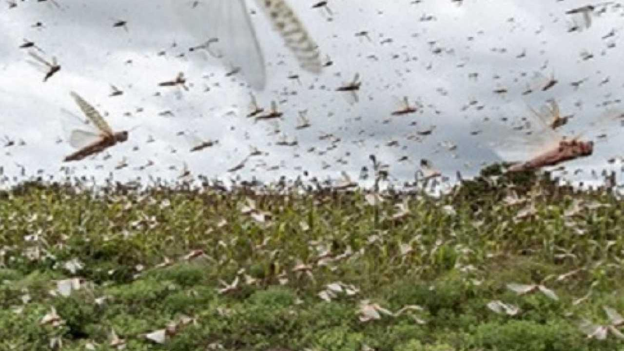 Locust control campaign in an area of 3 lakh hectares