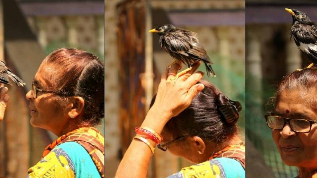 This lady from a fishing village rescued the bird chicks that fall down from the nests in Goa