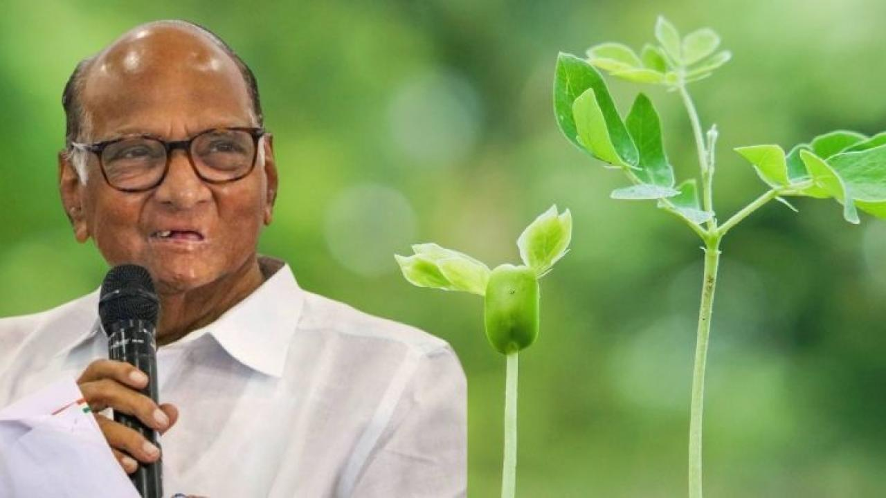 The plant in the Sahyadri mountain range has been named after former Union Agriculture Minister Sharad Pawar