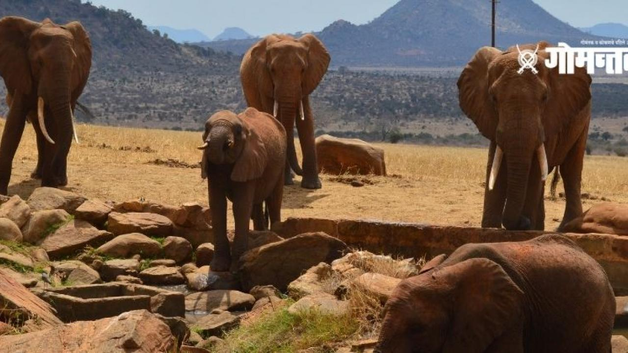 The return of elephants has created an atmosphere of fear and panic among farmers