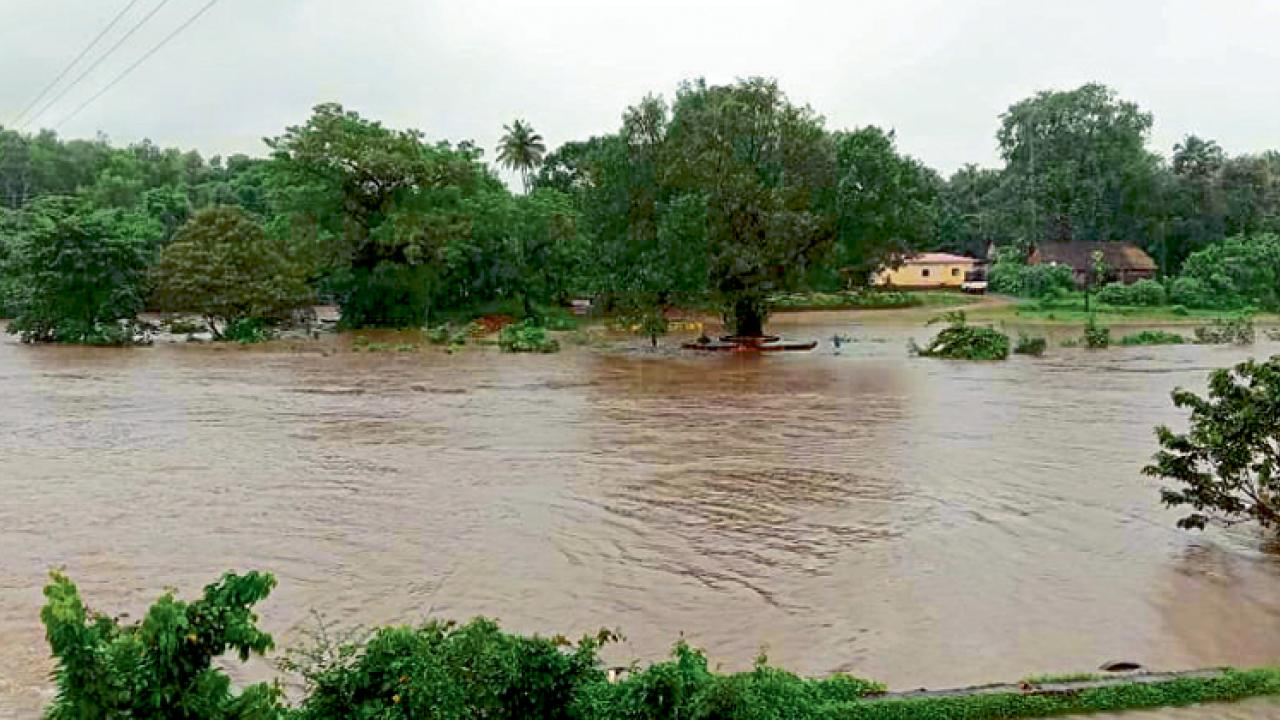 Goa: Heavy rain crush hope of farmers in Bicholim