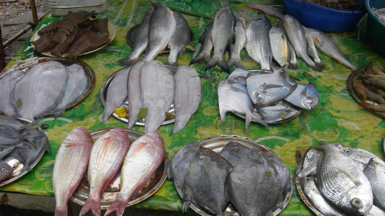 Ponda municipal will get decision on Maroli bazar and fish market