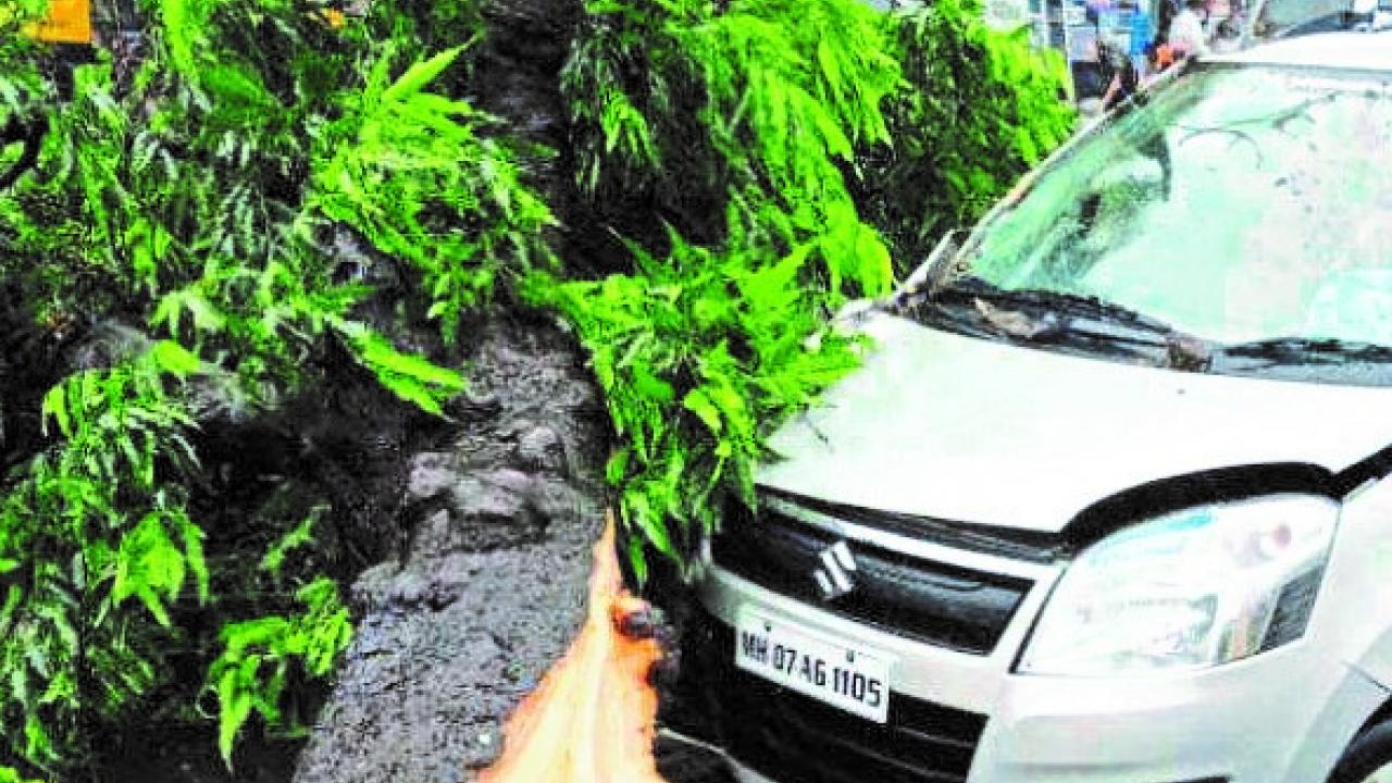 tree fall on vehicle