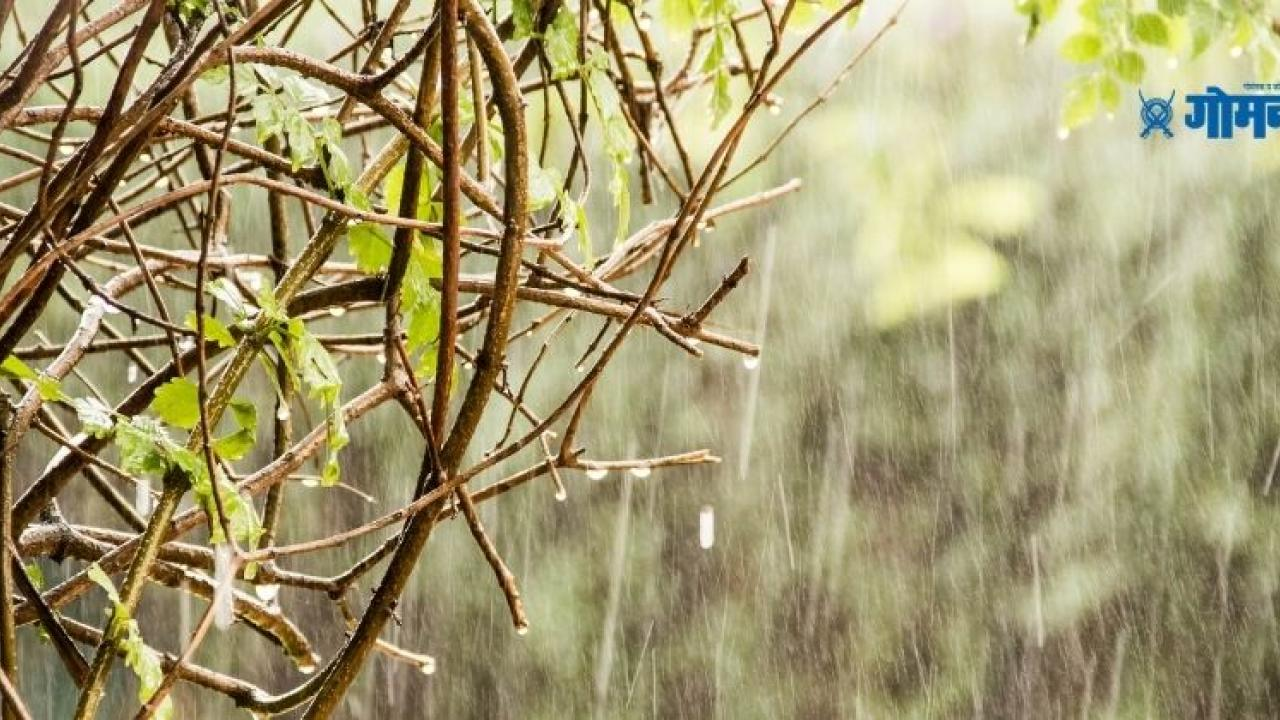 Presence of unseasonal rains in Maharashtra Storm and hail warning from the weather department